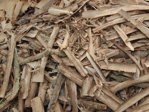 Как выглядит кора осины при аденоме простаты