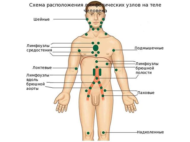 паразиты в организме человека ввс