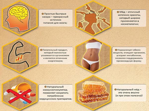 Полезность меда для человека