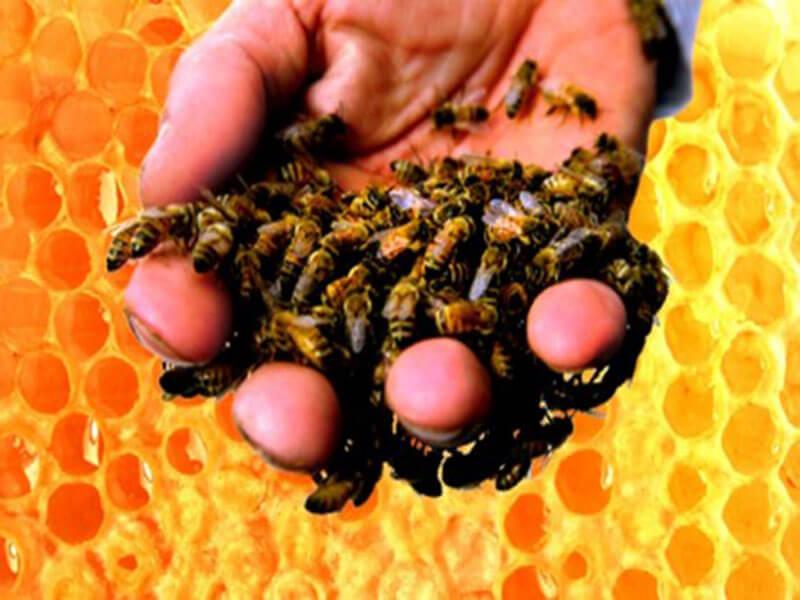 Как сажать пчел на спину 224