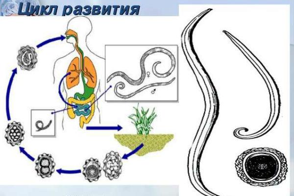 лекарство для уничтожения паразитов в организме человека