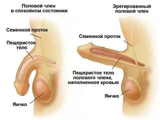 как можно увеличить пенис Себеж