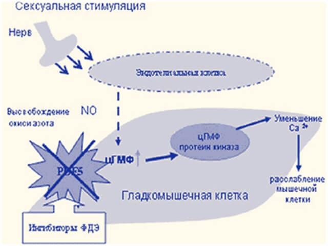 препарат сиалис противопоказания