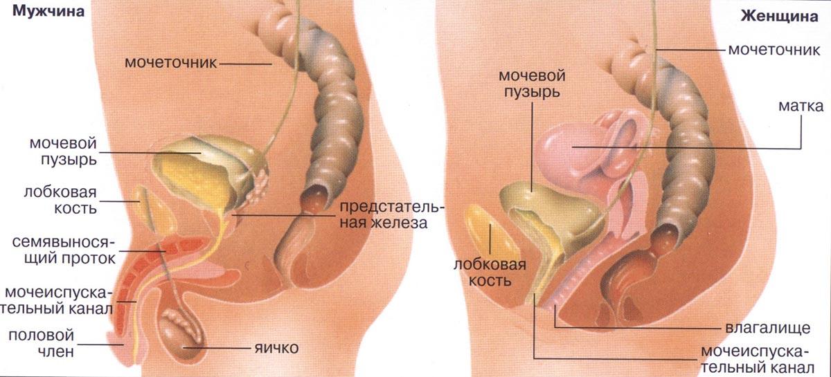 analniy-seks-u-zhenshini