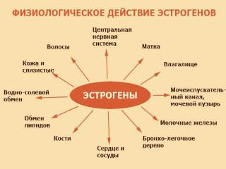 Женский гормон эстроген