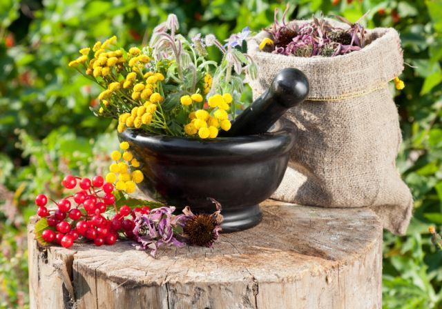Травы от гипертонии как альтернатива таблеткам: калина, болиголов ...