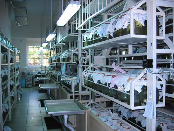 Разведение лечебных пиявок нате специальных биофермах