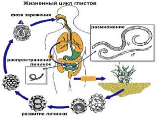 лечение паразитов в кишечнике человека