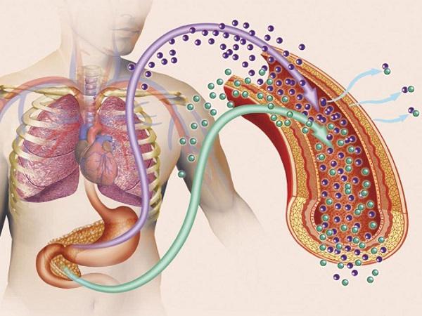 Сахарный диабет – эндемия эндокринной системы