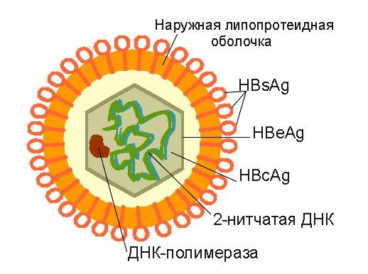 Поверхностный антиген вируса гепатита В
