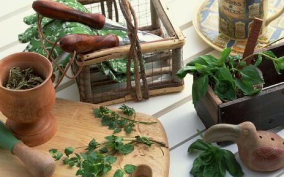 Травы при остеохондрозе: внутреннее и наружное применение