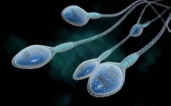 Ненадежность банков спермы в США: потеряны образцы