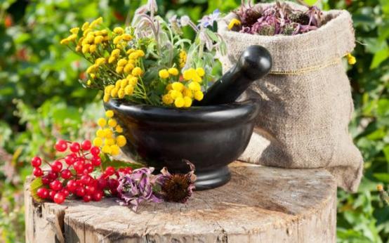 Травы от гипертонии: успокаивающее, регуляторное, сосудорасширяющее и мочегонное действия