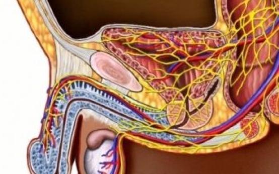 Симптомы импотенции у мужчин: основные понятия