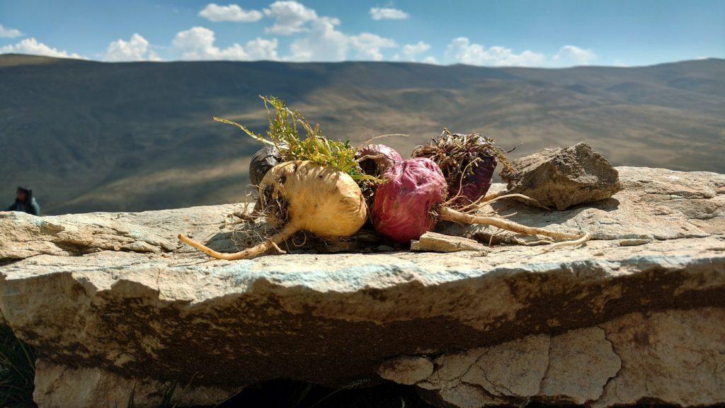 Перуанская мака в горах